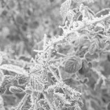 Tuesday, January 6th, 2015 in Frankfurt - Number 007 of 366mm Looking at this wonderful hoar frost in the surroundings of Frankfurt