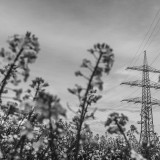 Sunday, April 26th, 2015 in Oberursel - Number 117 of 366mm From the rape field directly into the electrical pole