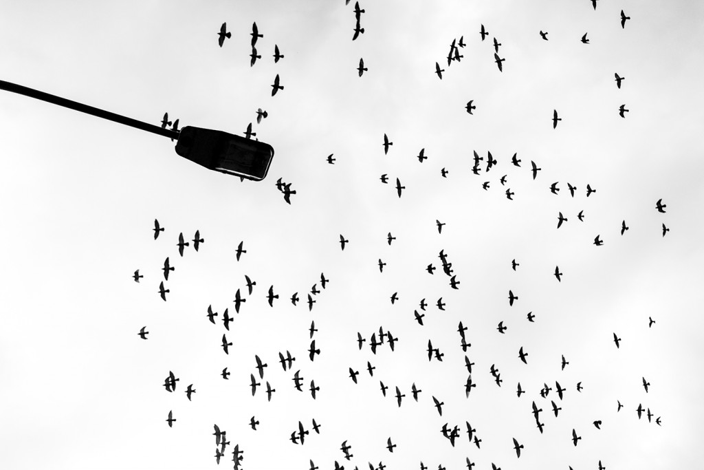 Tuesday, October 20th, 2015 in Frankfurt – Number 294 of 366mm Birds flying across the sky