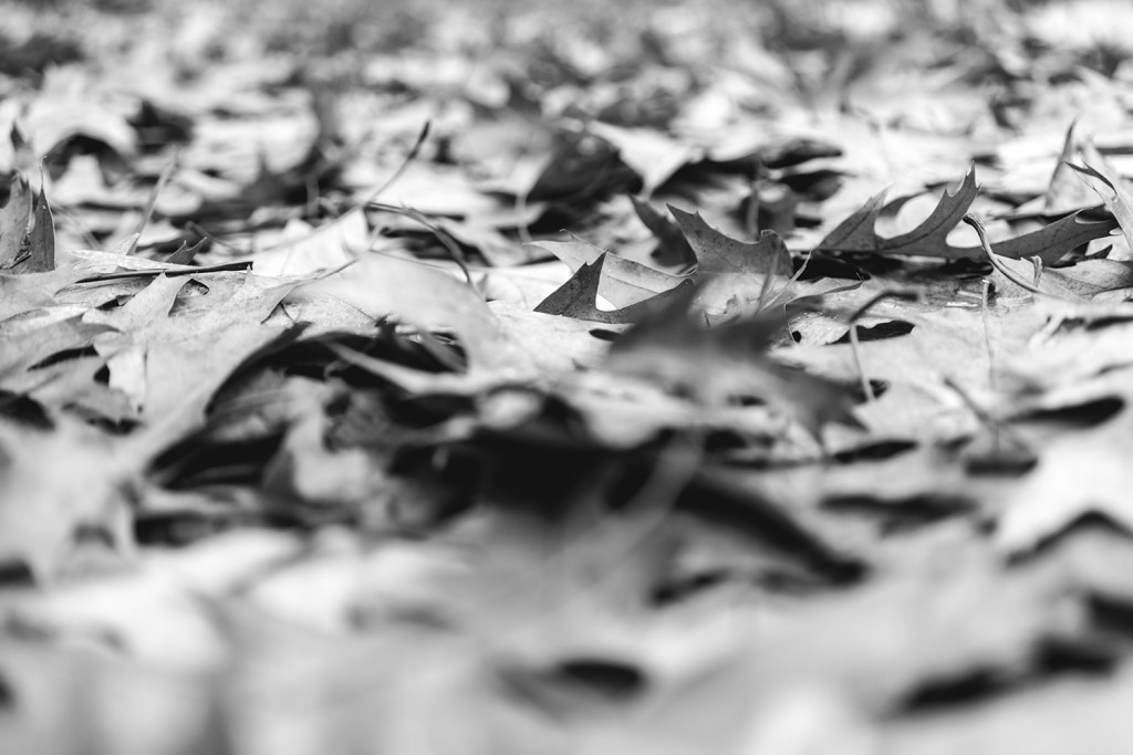 Tuesday, November 3rd, 2015 in Ahrensburg – Number 308 of 366mm Foliage on the ground